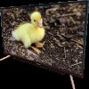 Pentanik 43 inch Smart Android TV with Soundbar 5146
